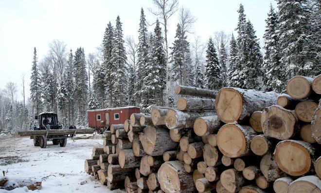 الخشب سلاح روسيا الجديد للحد من اتكالها على الهيدروكربونات